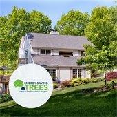 100 Free Trees promo
