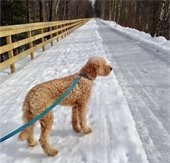 Trail walking with Copper on the Mascoma River Greenway! Photo submitted by Marsha Perkins.