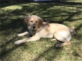 Seamus - 2018 Top Dog Entry