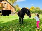 Feeding an autumn apple to Prince of Farr View Farm. Photo submitted by Kyle Hayman.