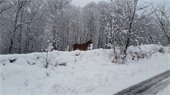 """Love this weather."" Ascutney View Farm. Photo submitted by Bob Jobson."