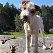 Top Dog Contestant Tally Ho