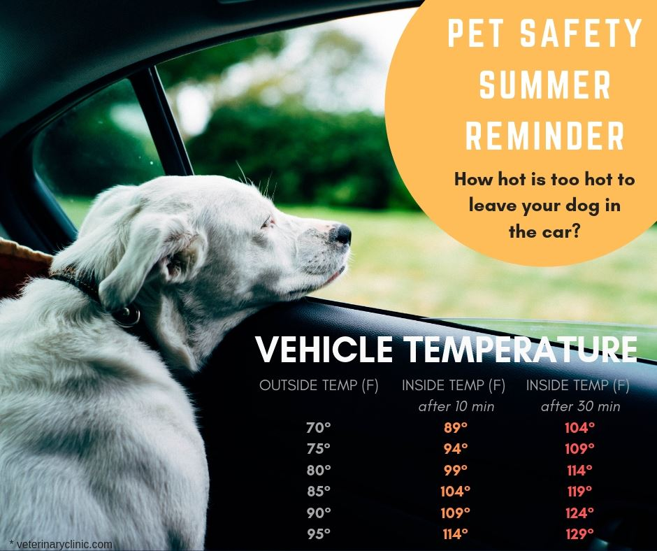 Summer Temperature Reminder for Dogs Left in Vehicles