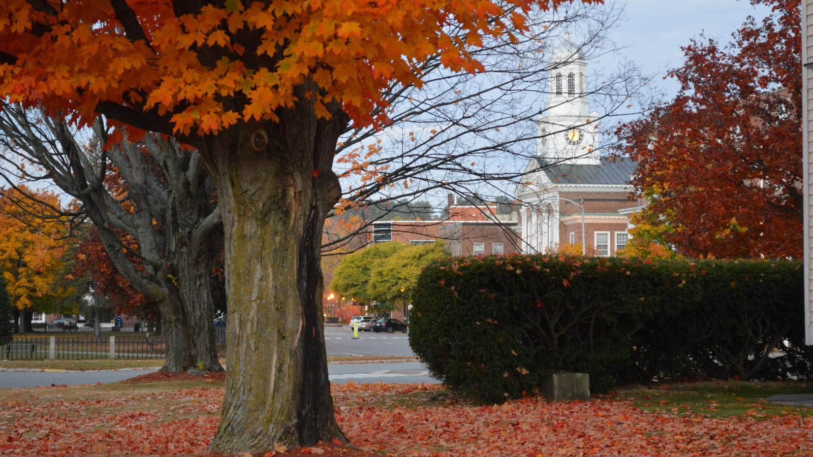 photo of city hall through fall foliage