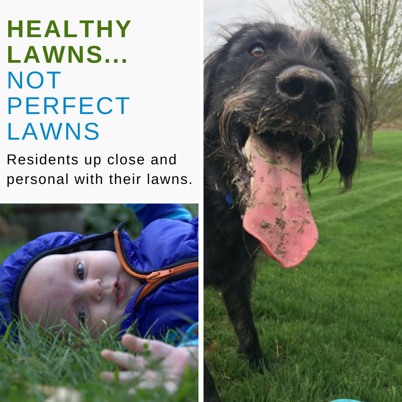 Healthy Lawns not perfect lawns photo grid with baby and dog on lawn