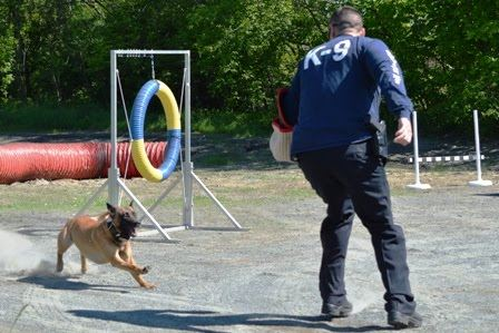 Dog Preparing to Simulate Attack With Officer